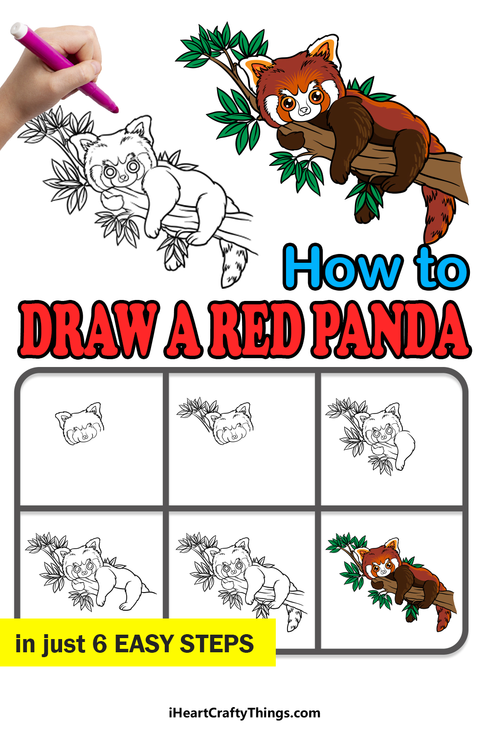 how to draw a red panda in 6 easy steps