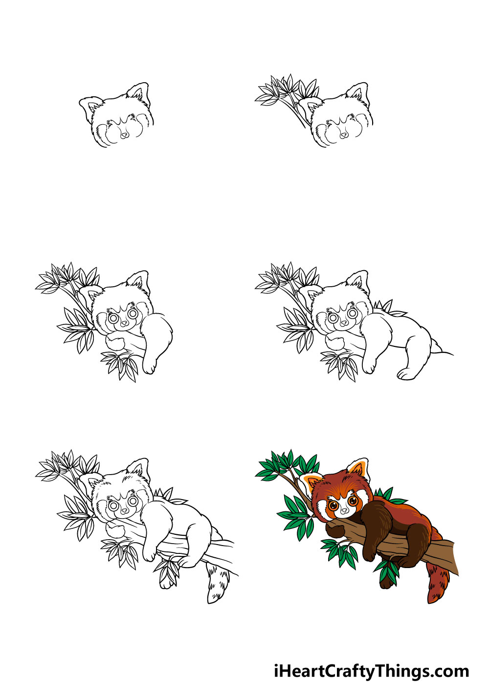 How to Draw A Red Panda in 6 steps