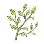 how to draw leaves on a tree image