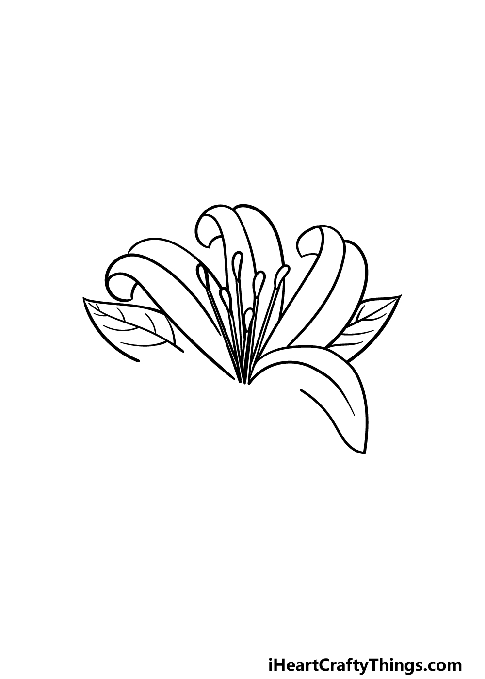 drawing Lily Flower step 3