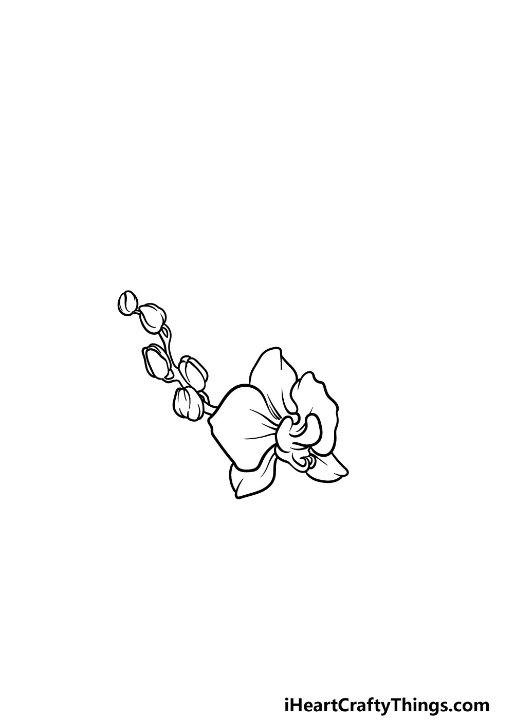 drawing an orchid step 3