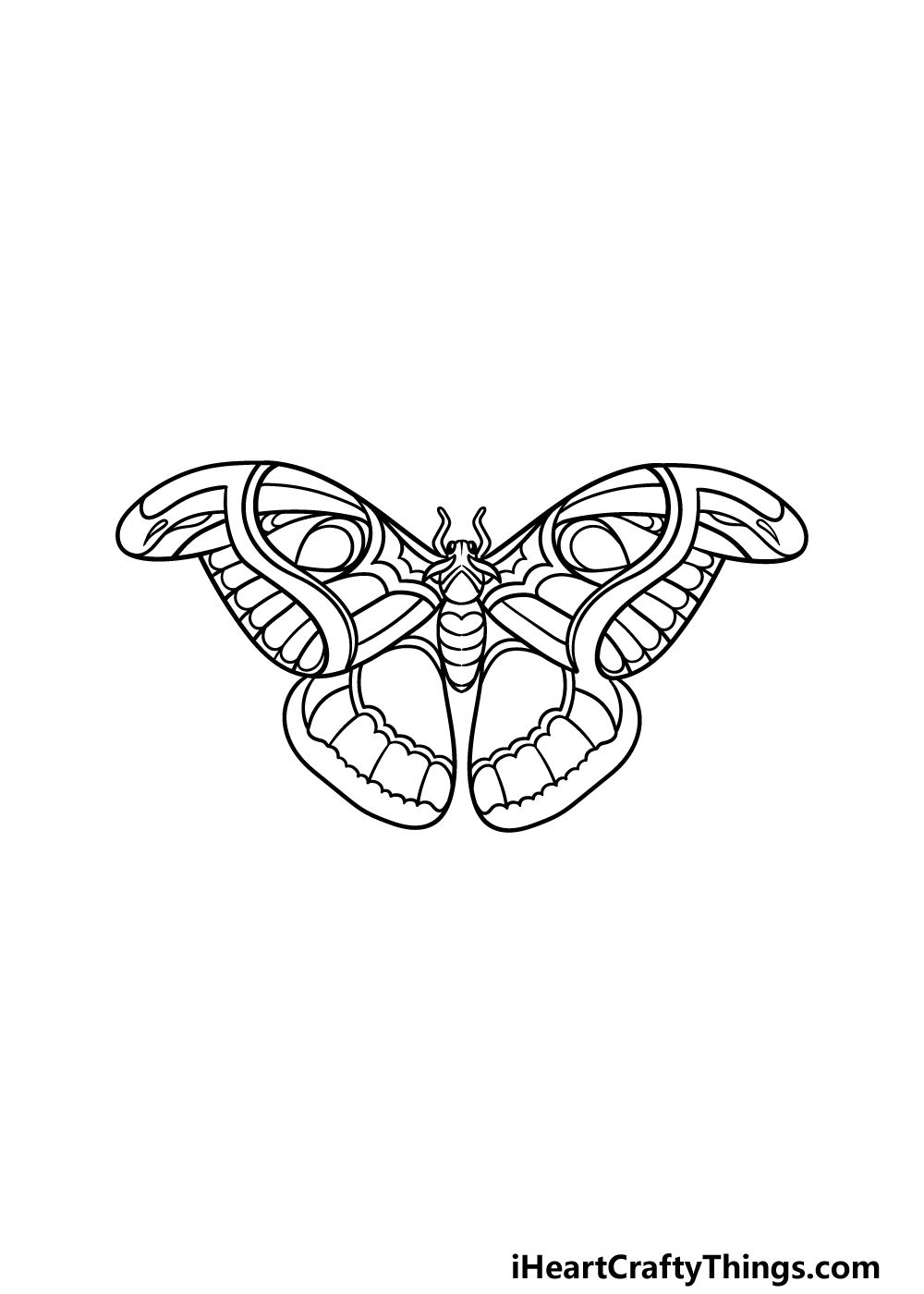 drawing a moth step 4