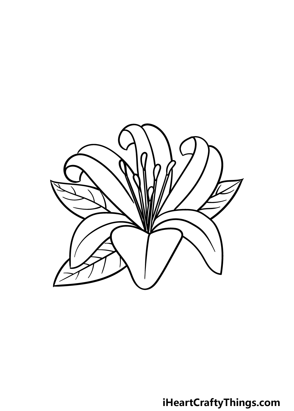 drawing Lily Flower step 4