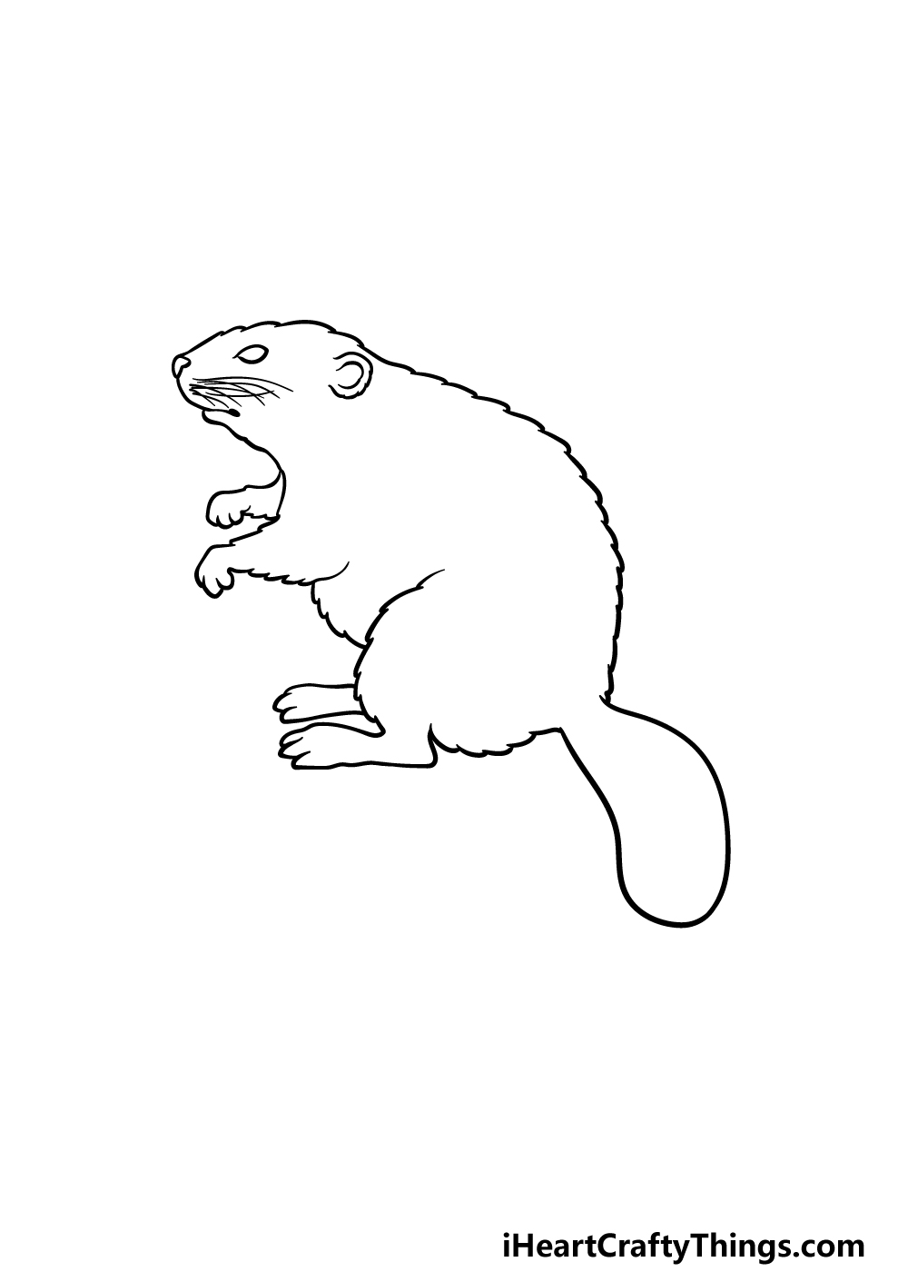 drawing a beaver step 4