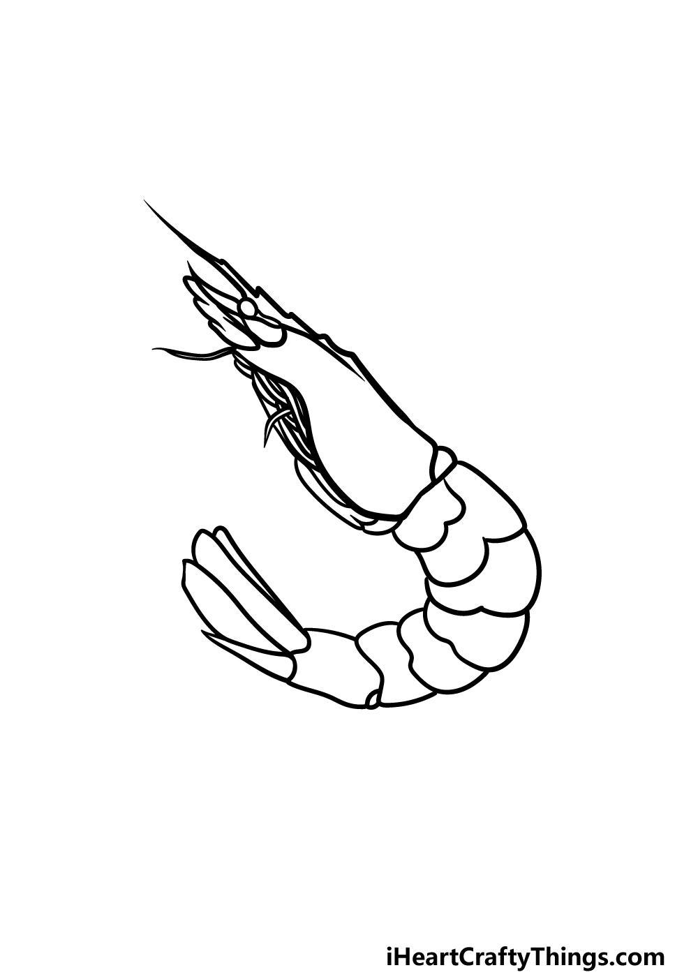 drawing a shrimp step 4