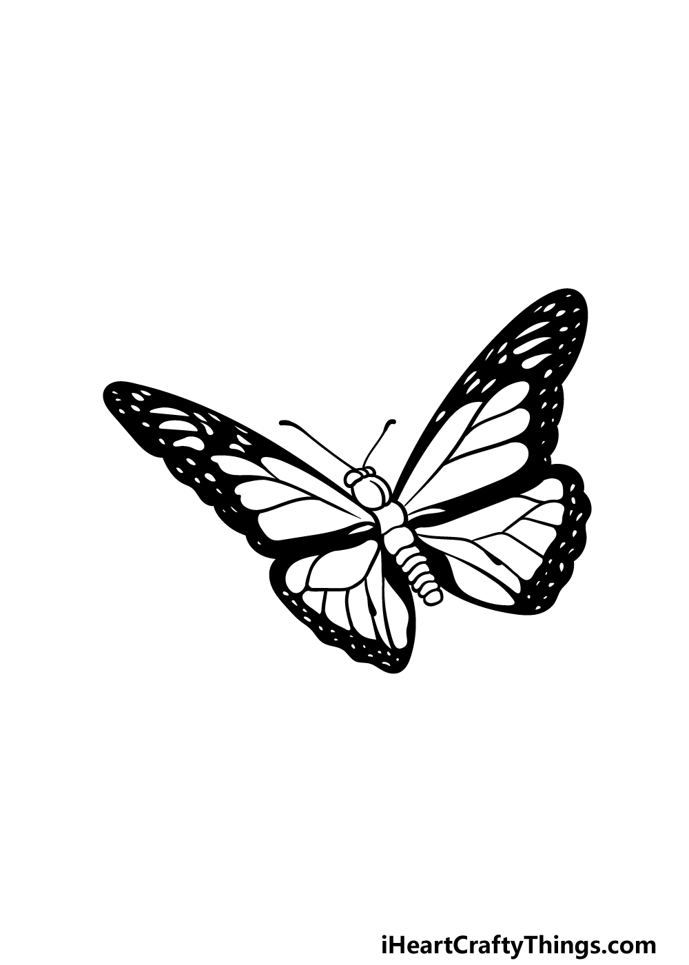 drawing  Monarch Butterfly step 5