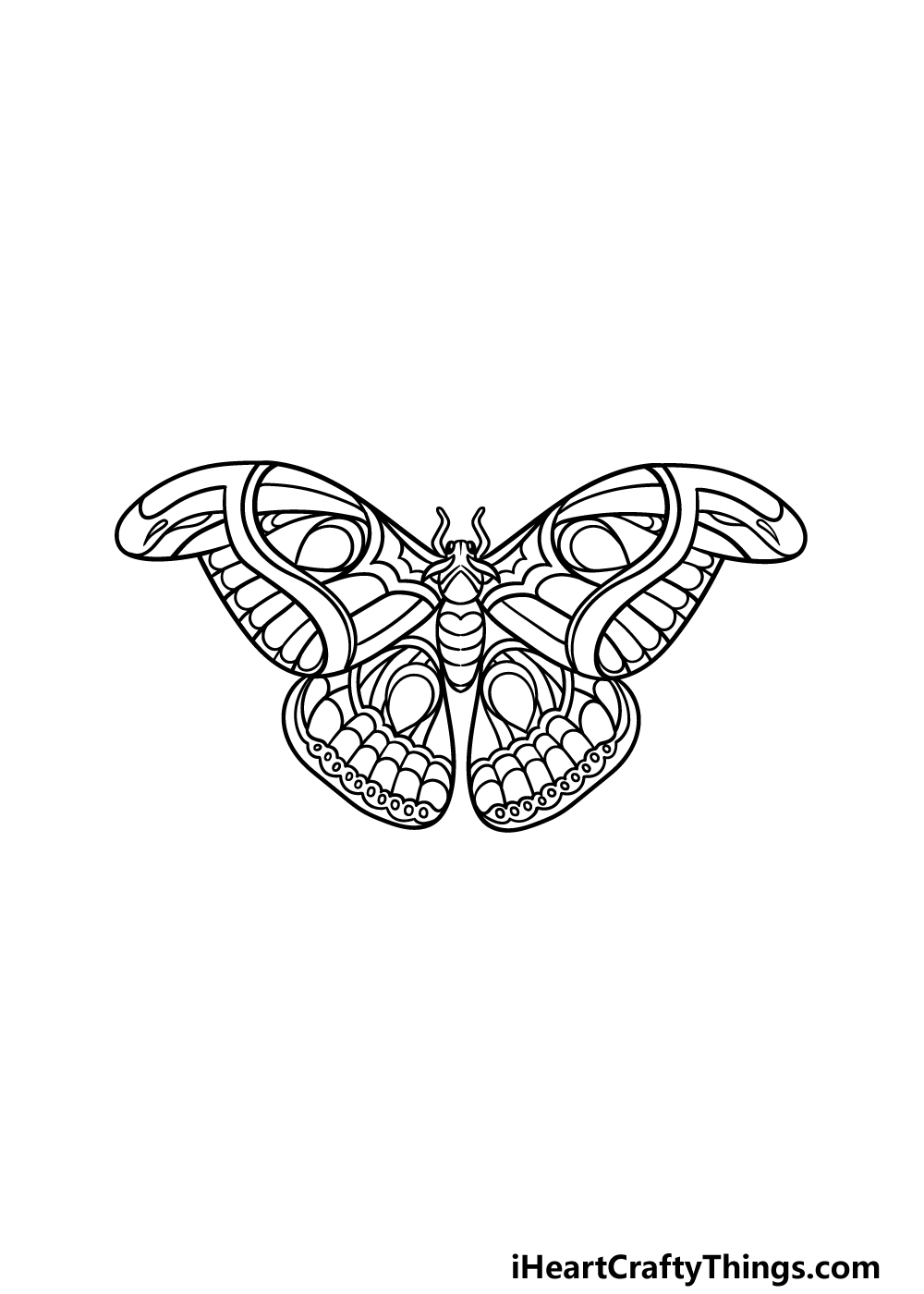 drawing a moth step 5