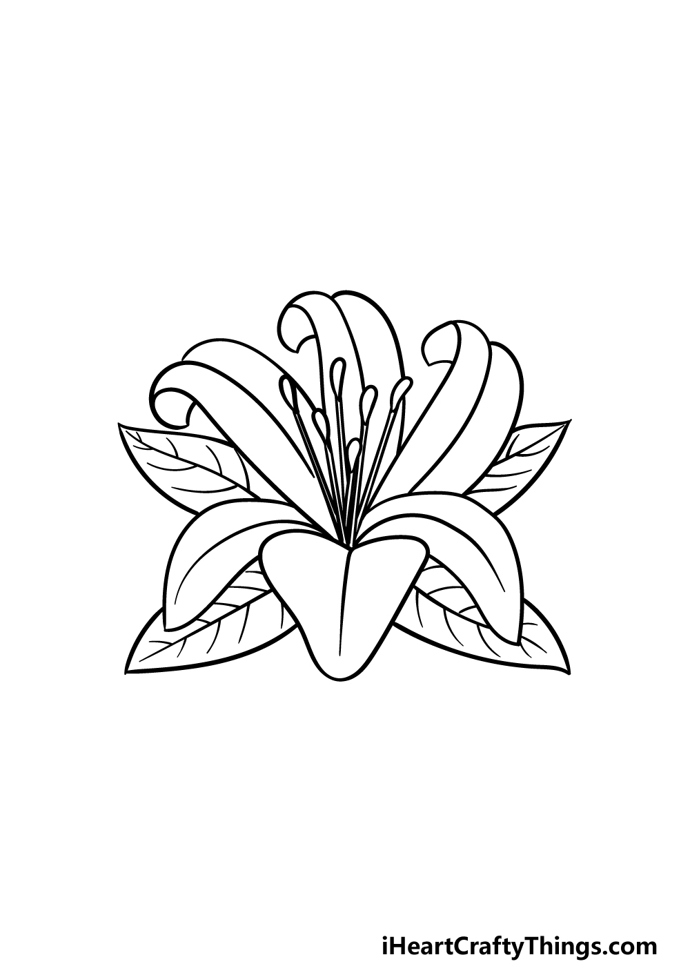 drawing Lily Flower step 5