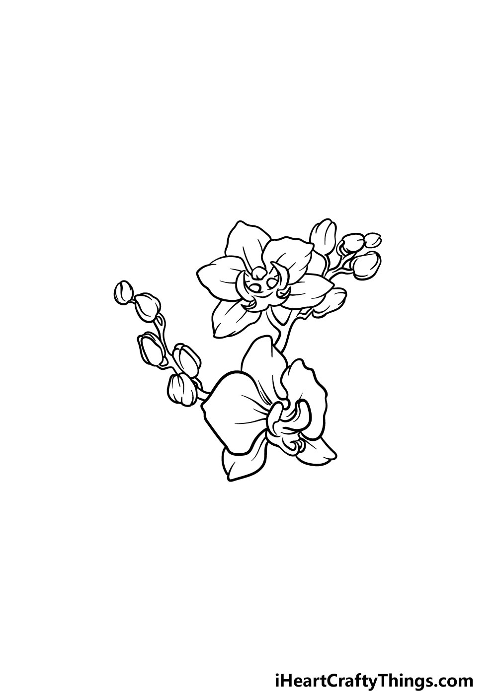 drawing an orchid step 5