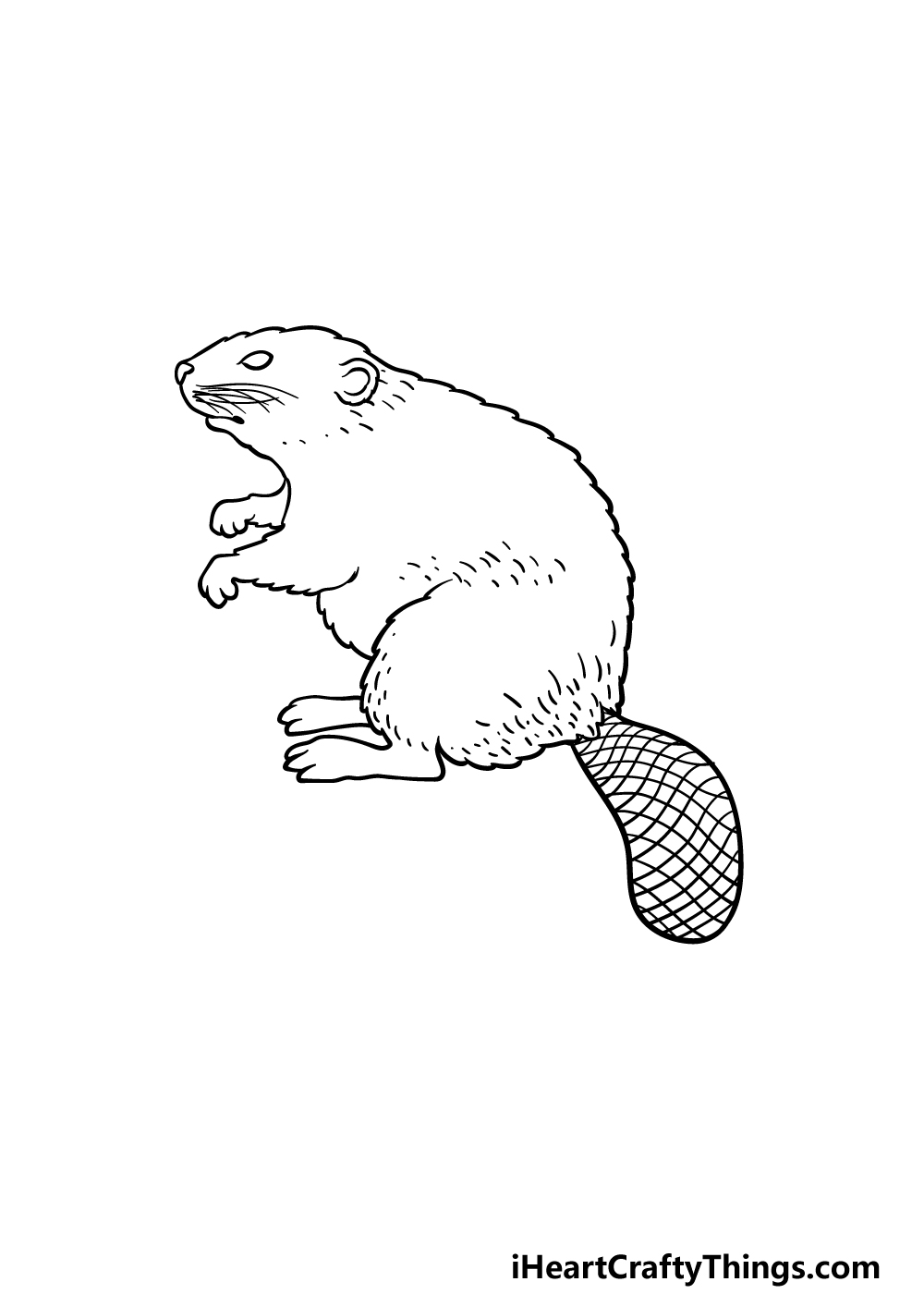 drawing a beaver step 5