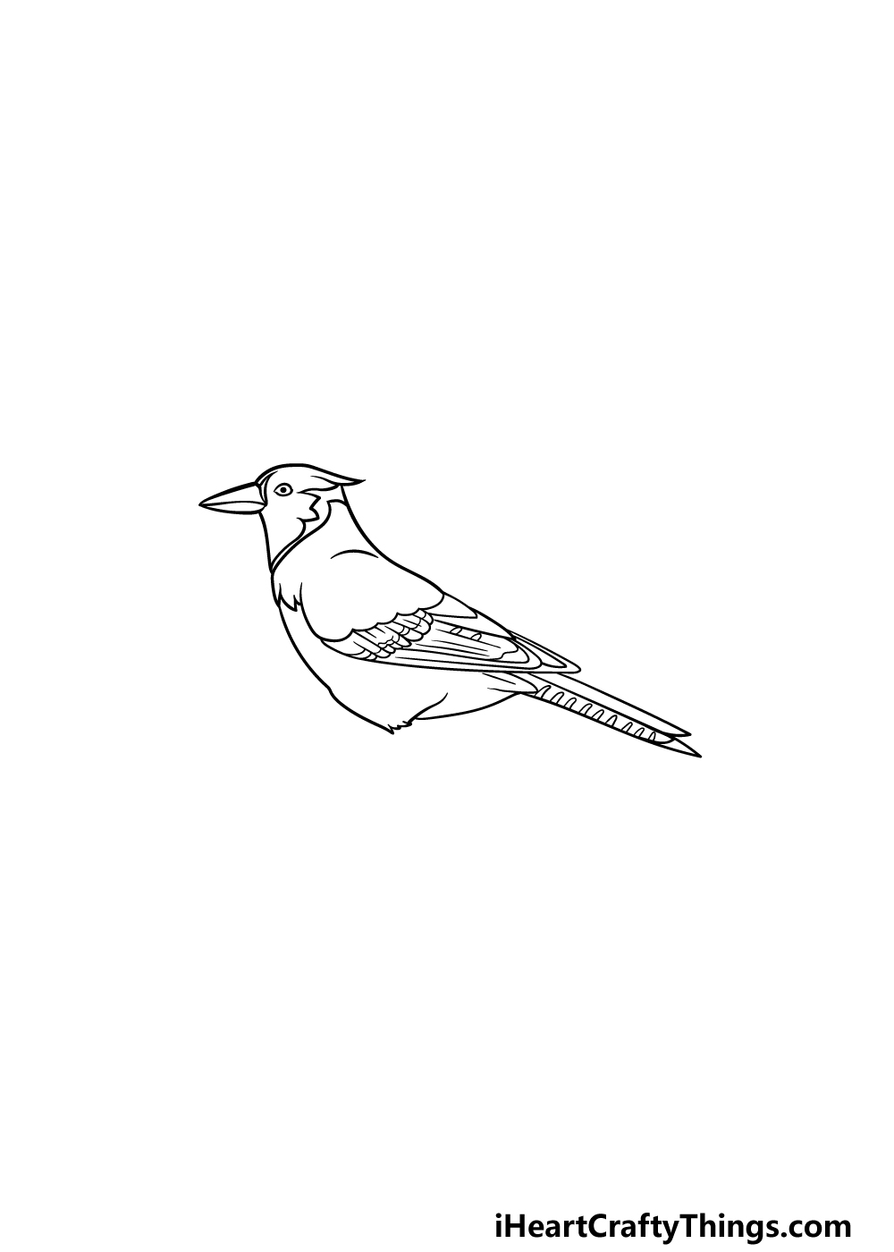 drawing a blue jay step 5