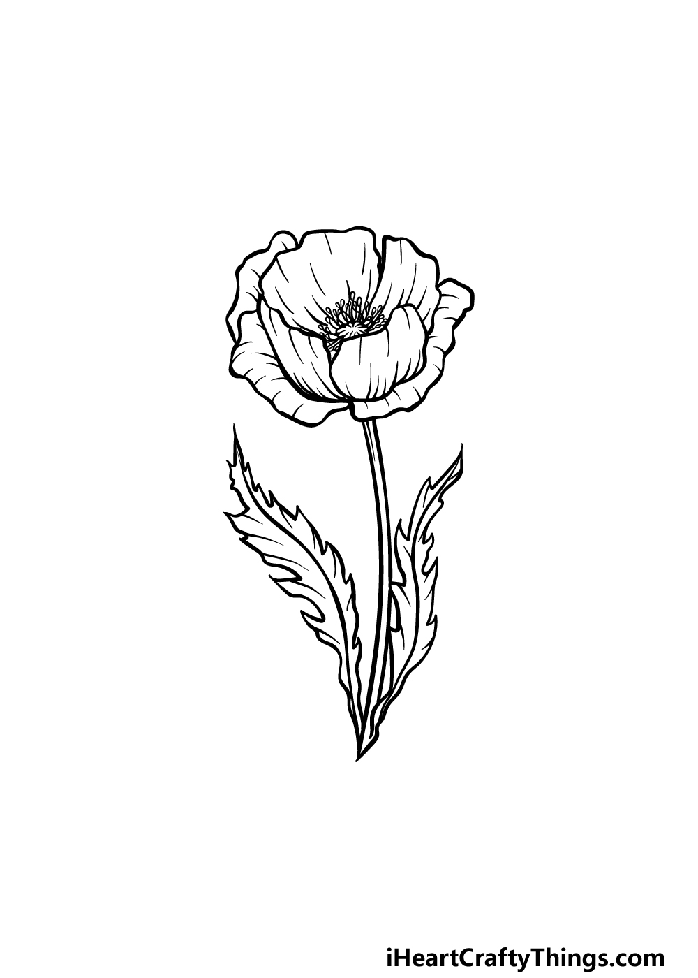 drawing a poppy step 5