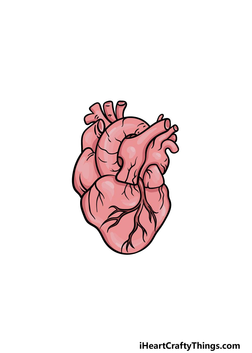 drawing a human heart step 6