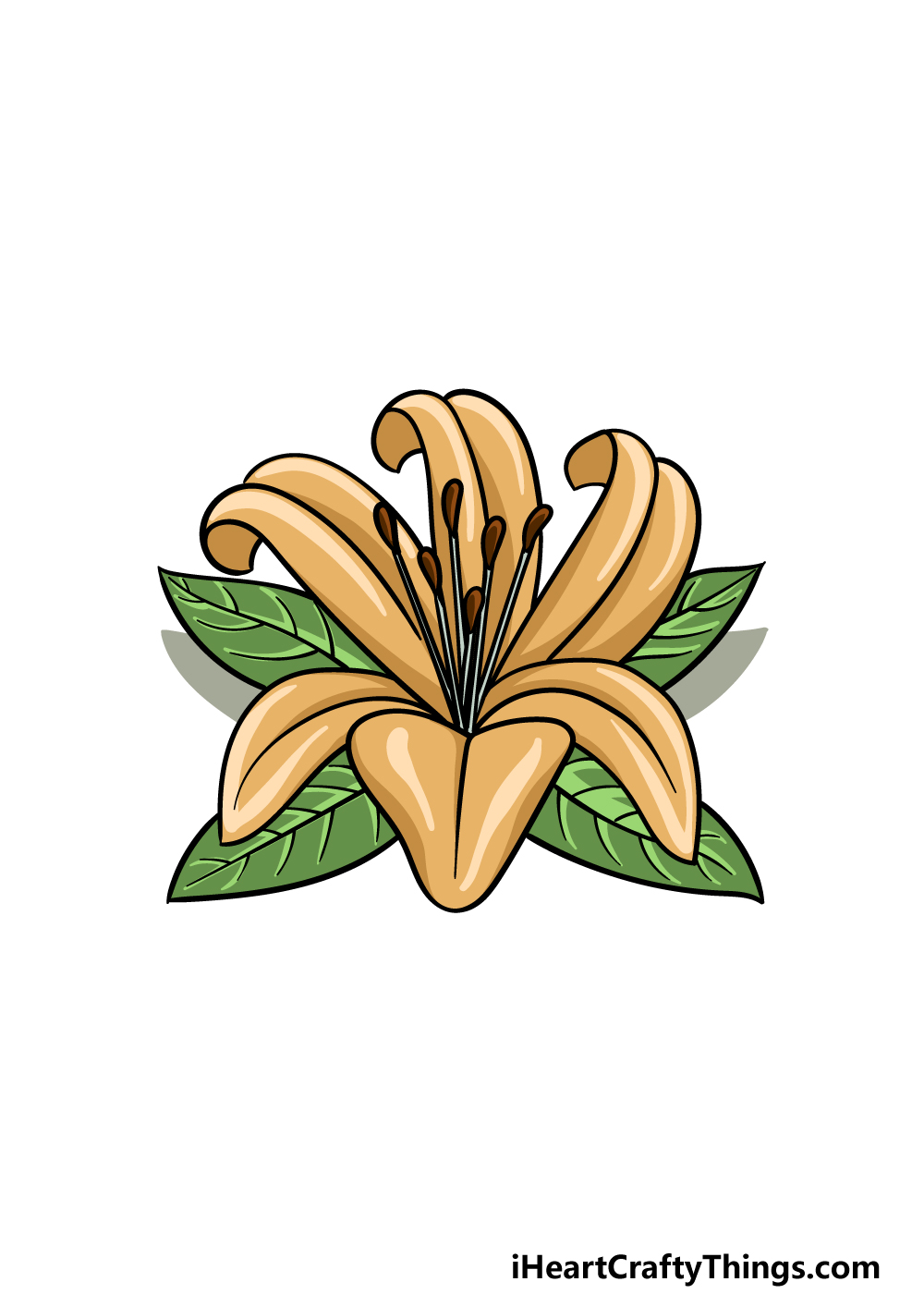 drawing Lily Flower step 6