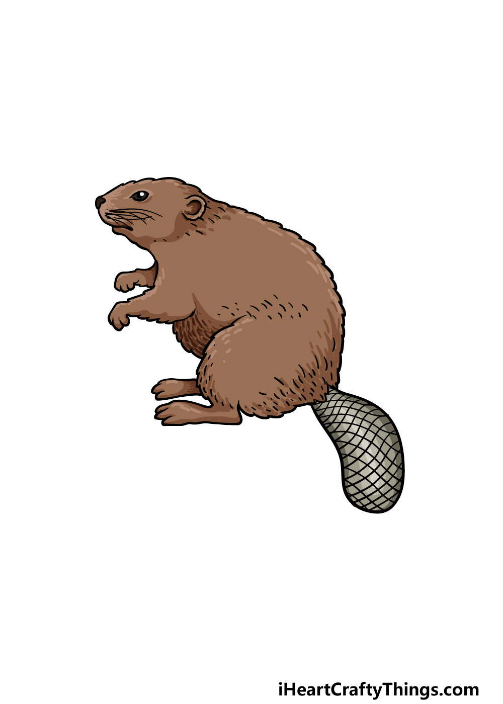 drawing a beaver step 6