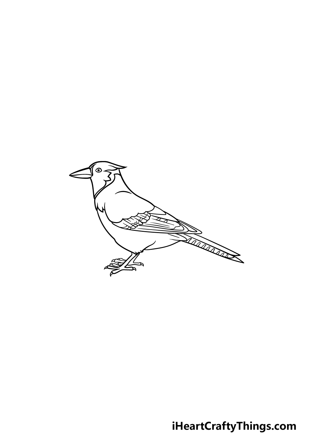 drawing a blue jay step 6