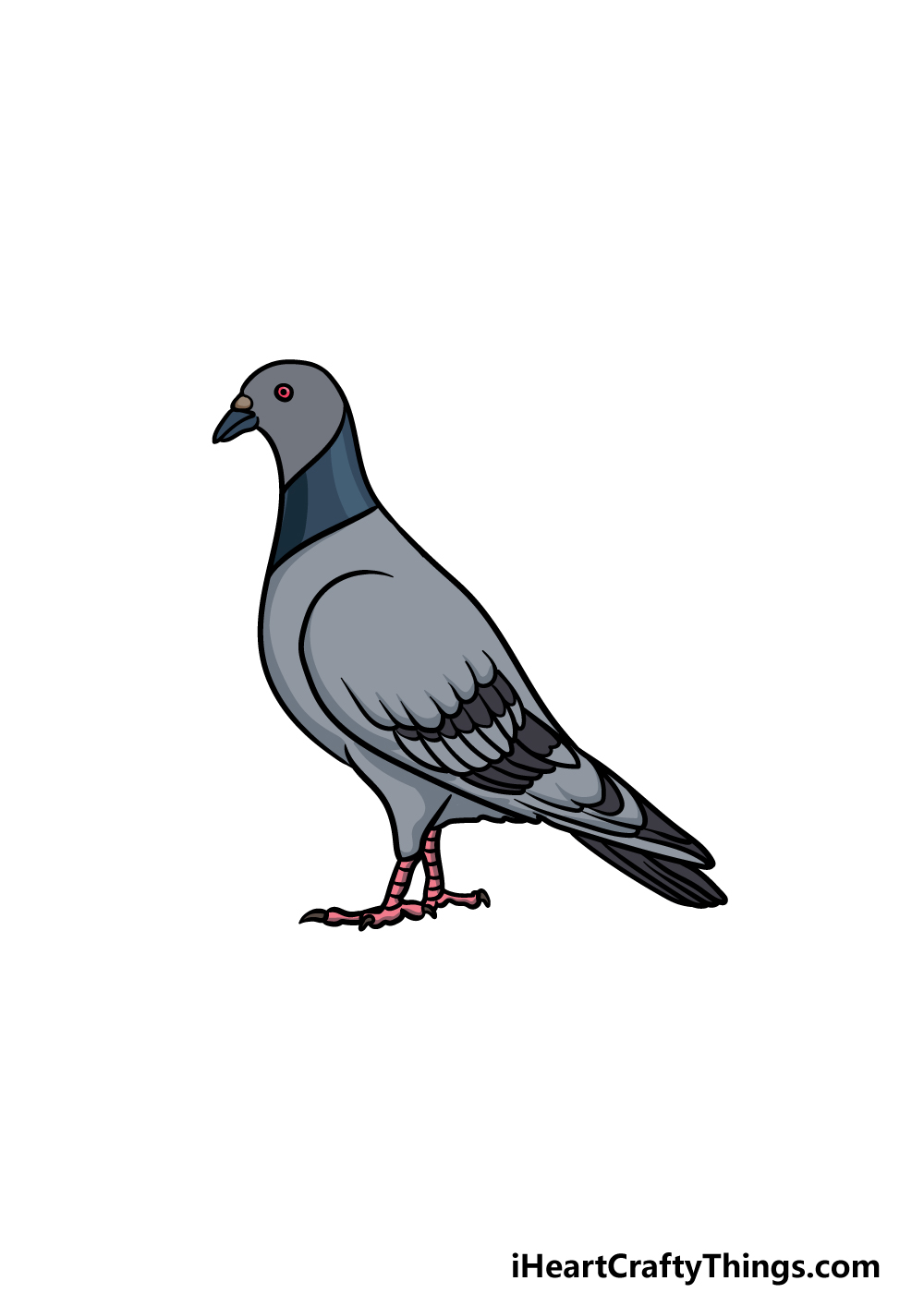 drawing a pigeon step 6