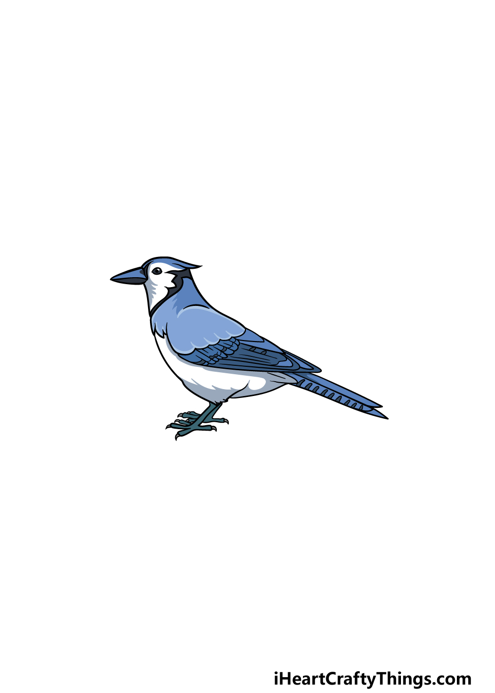 drawing a blue jay step 7