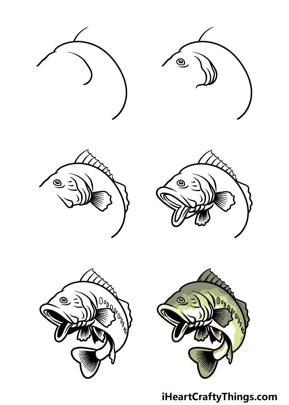 how to draw a bass in 6 steps