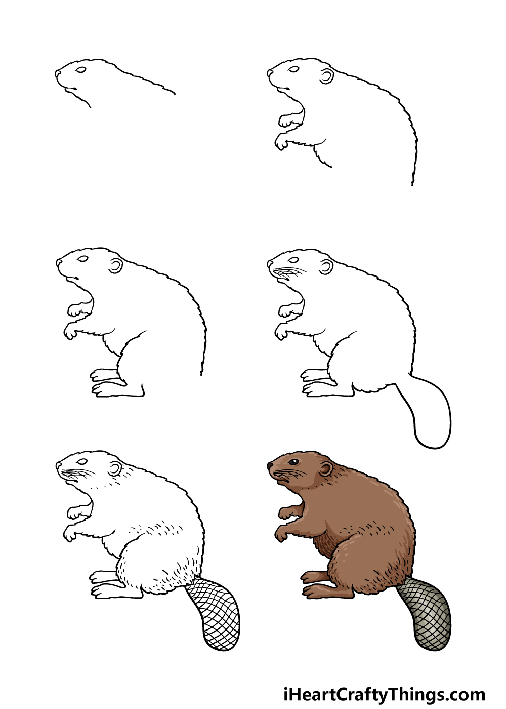 how to draw a beaver in 6 steps