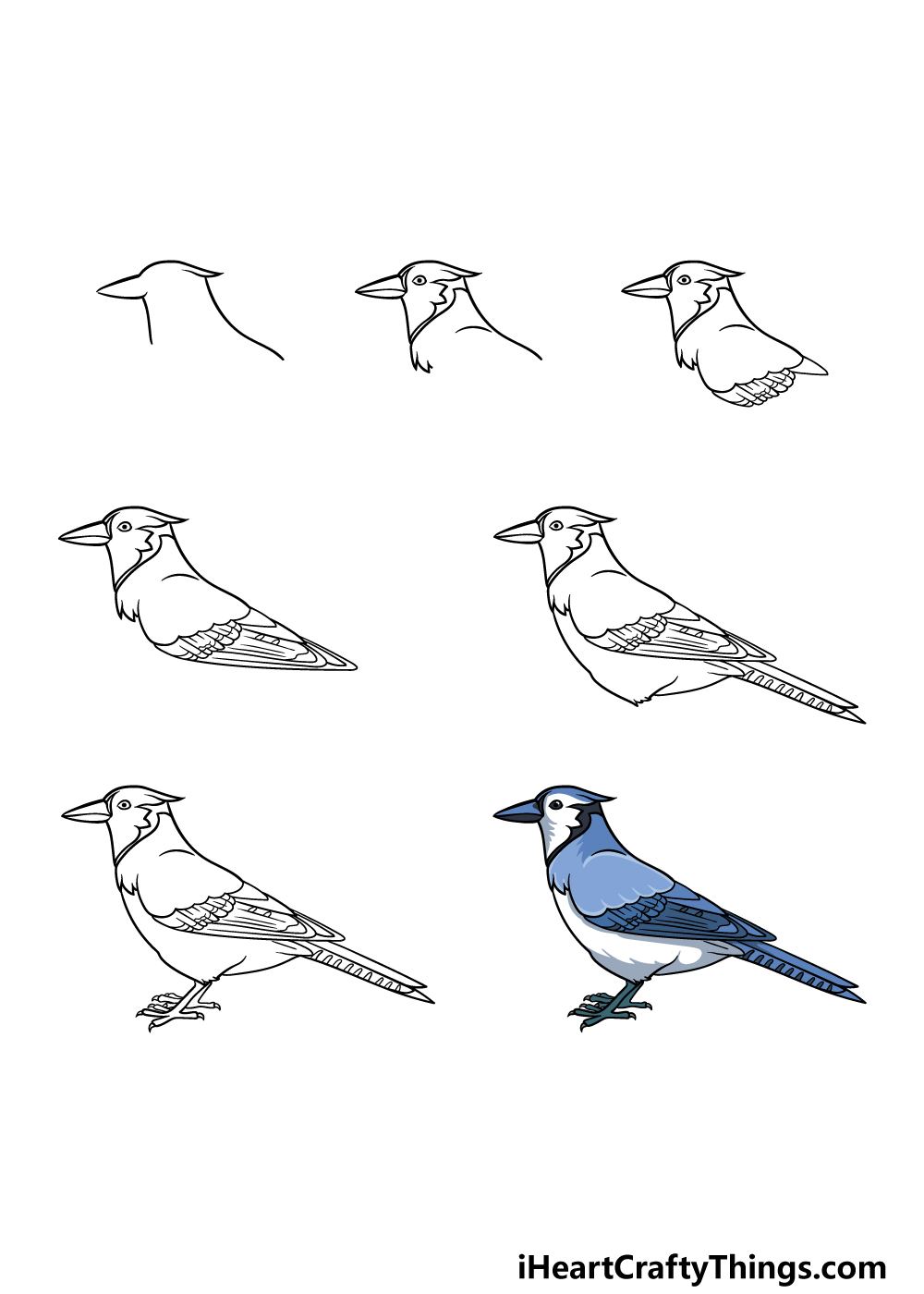 how to draw a blue jay in 7 steps