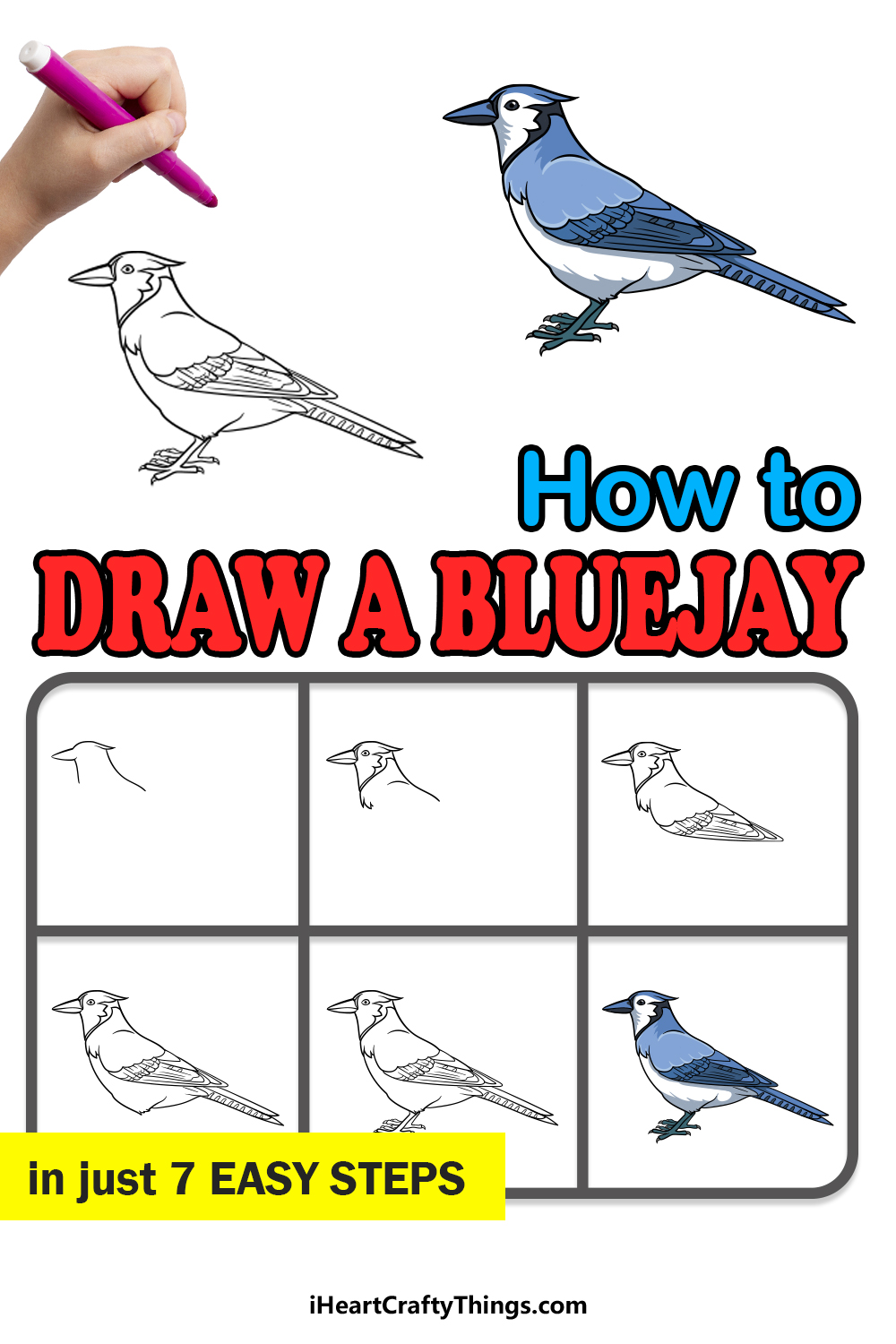 how to draw a blue jay in 7 easy steps