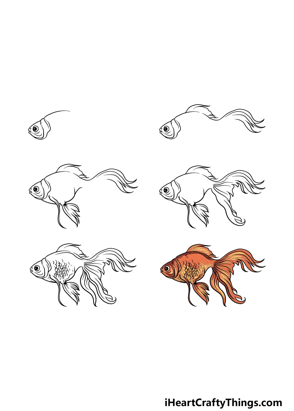 how to draw a goldfish in 6 steps