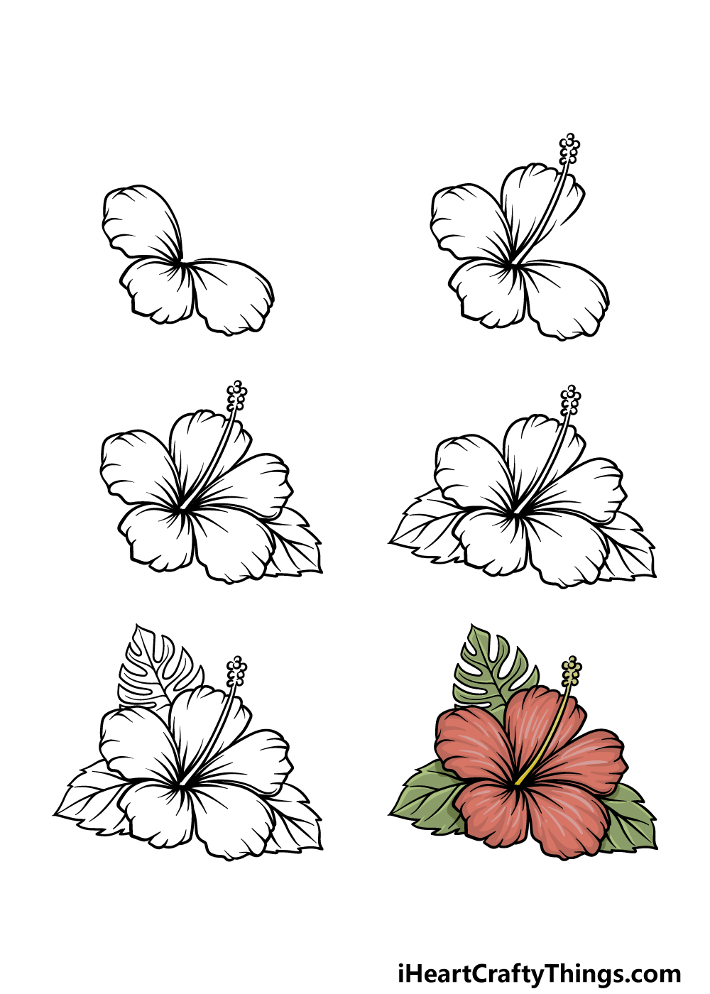 How to Draw A Hawaiian Flower in 7 steps