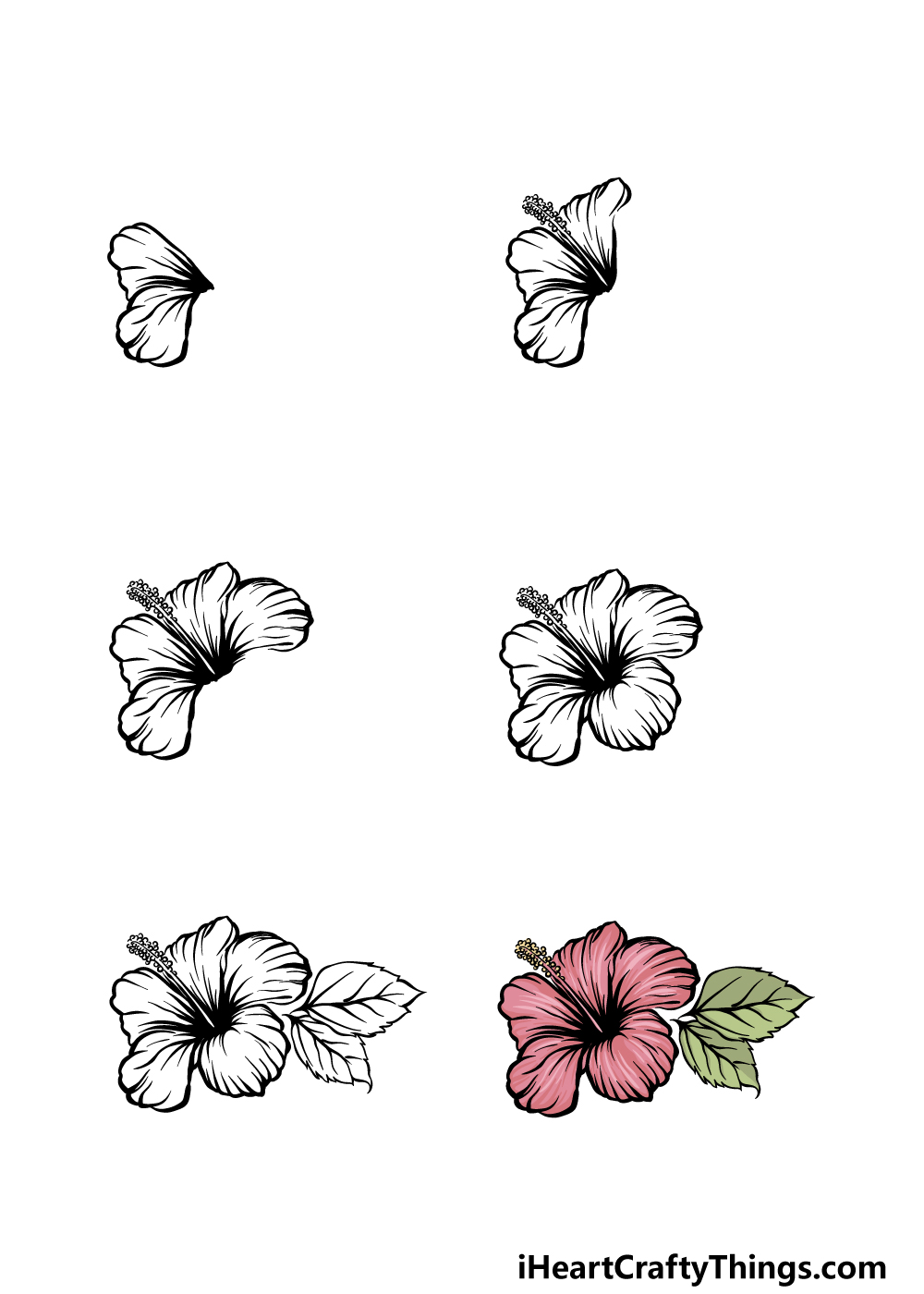 how to draw hibiscus in 6 steps