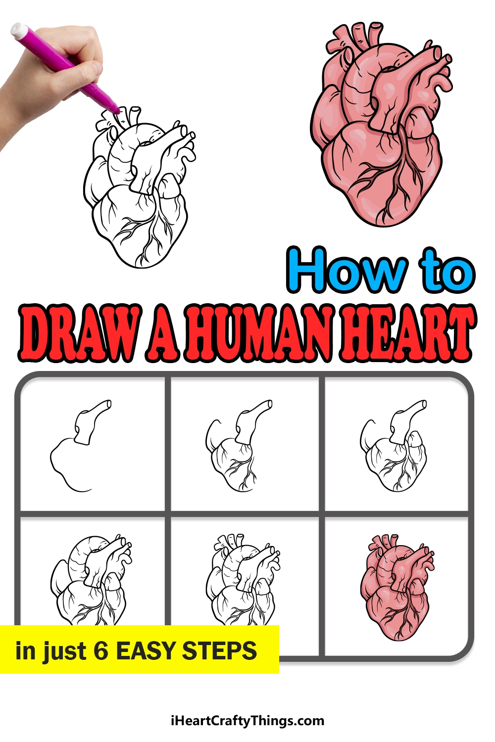 how to draw a human heart in 6 easy steps