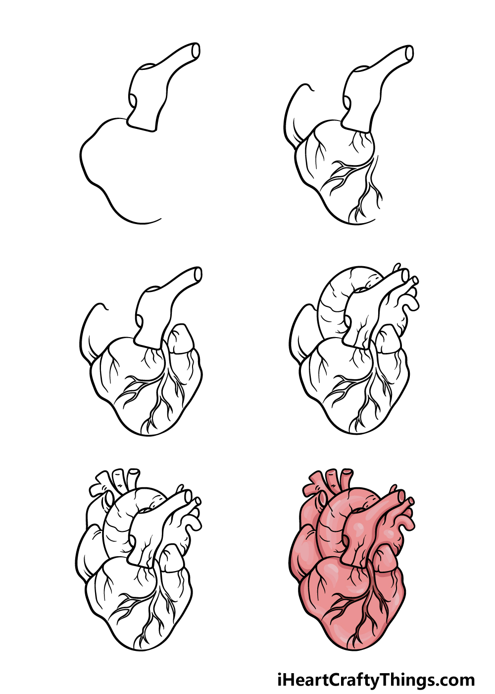 how to draw a human heart in 6 steps