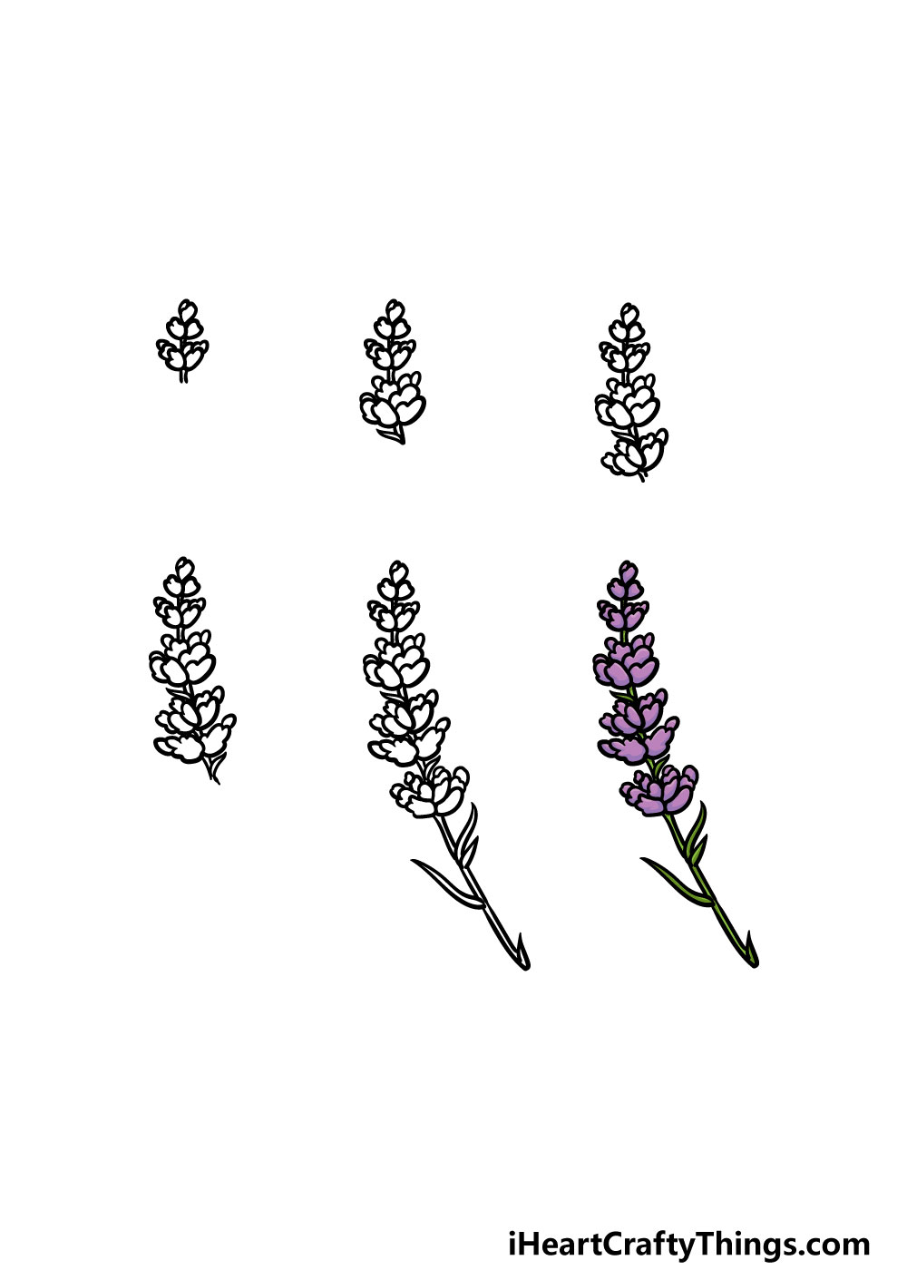 how to draw lavender in 6 steps