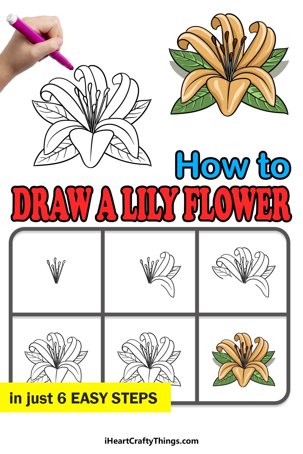 how to draw a Lily Flower in 6 easy steps