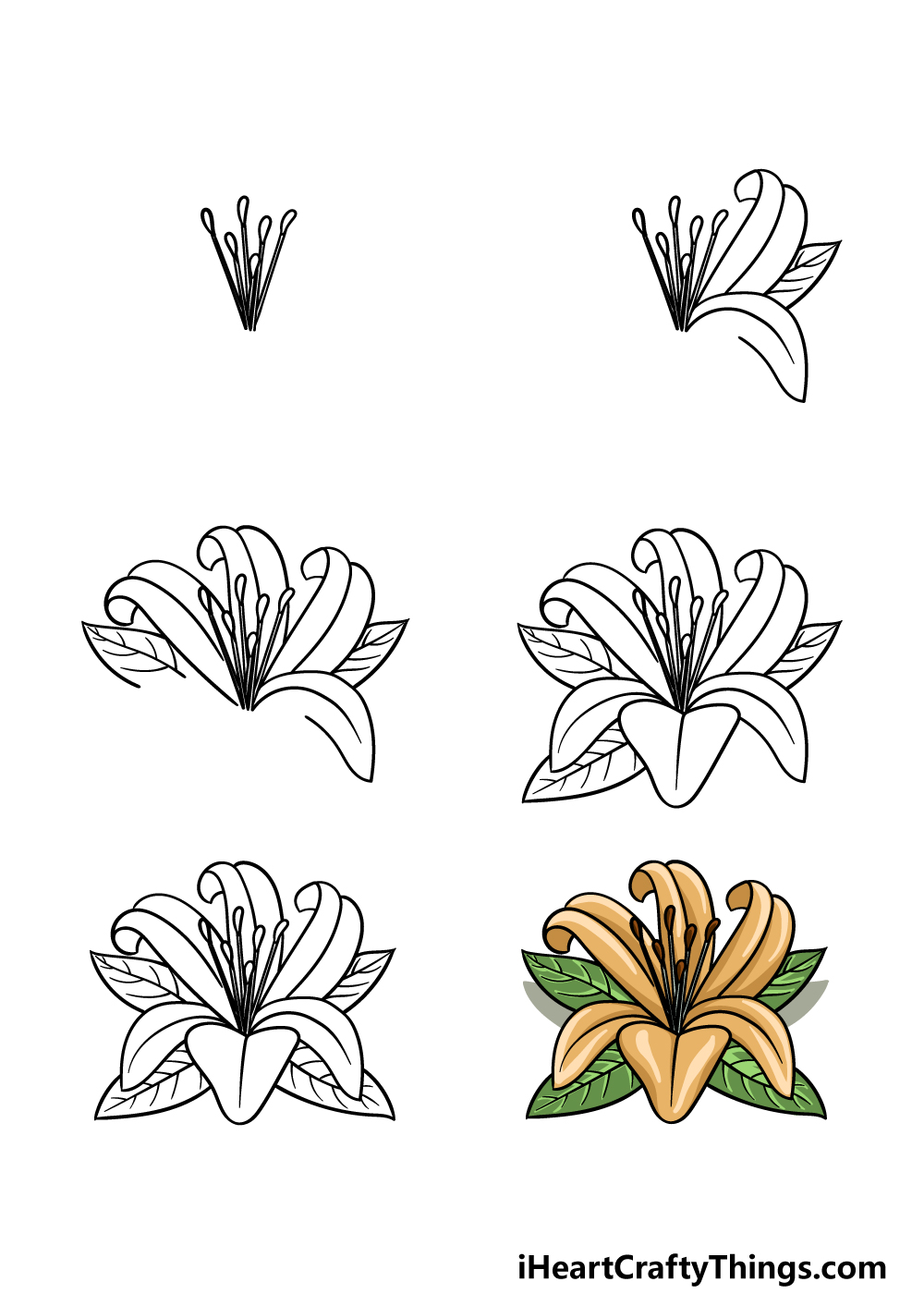 How To Draw A Lily Flower in 6 steps