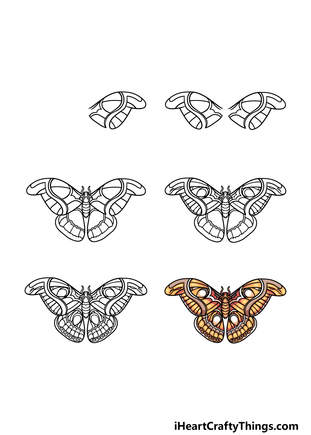 how to draw a moth in 6 steps
