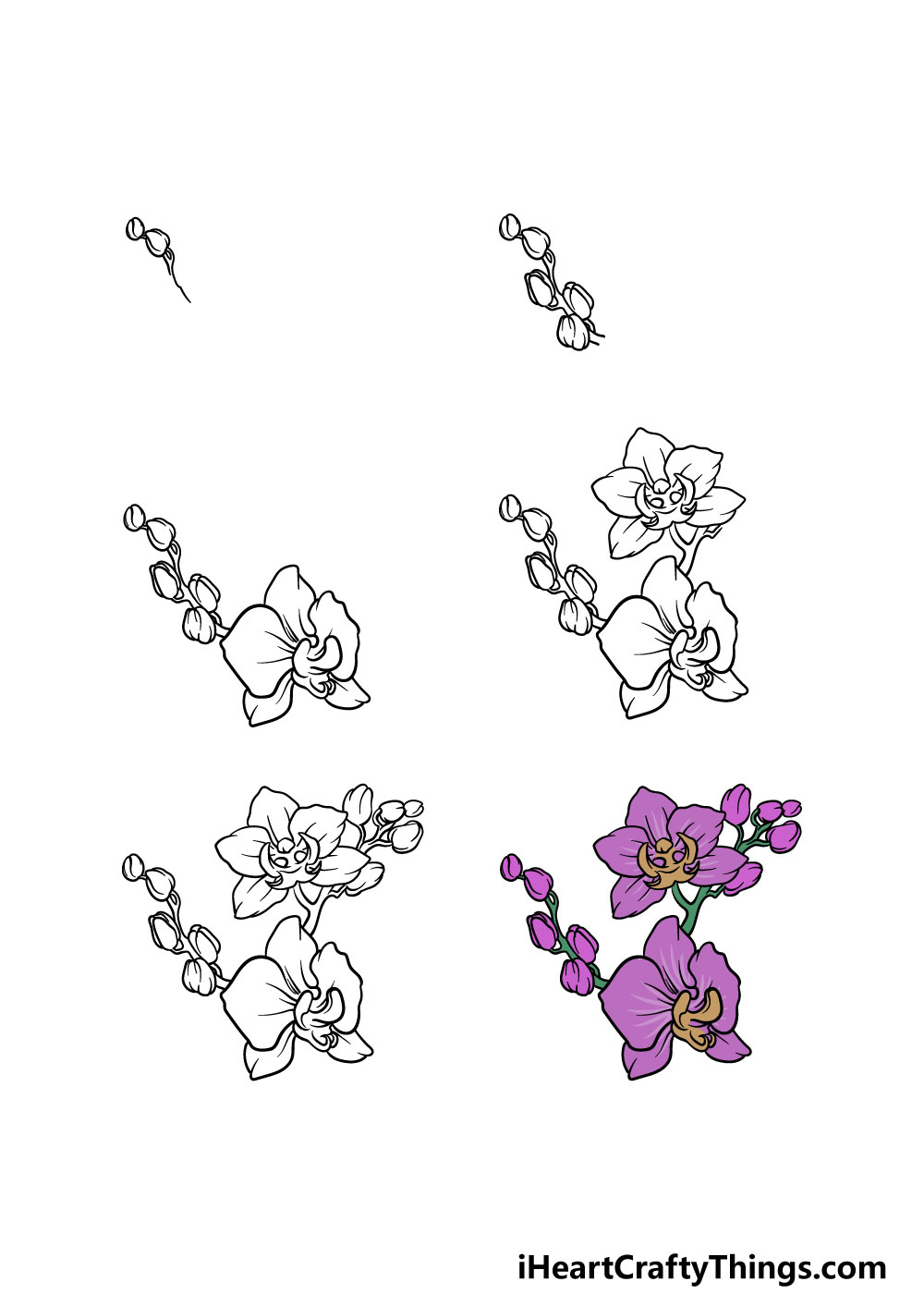 how to draw an orchid in 6 steps