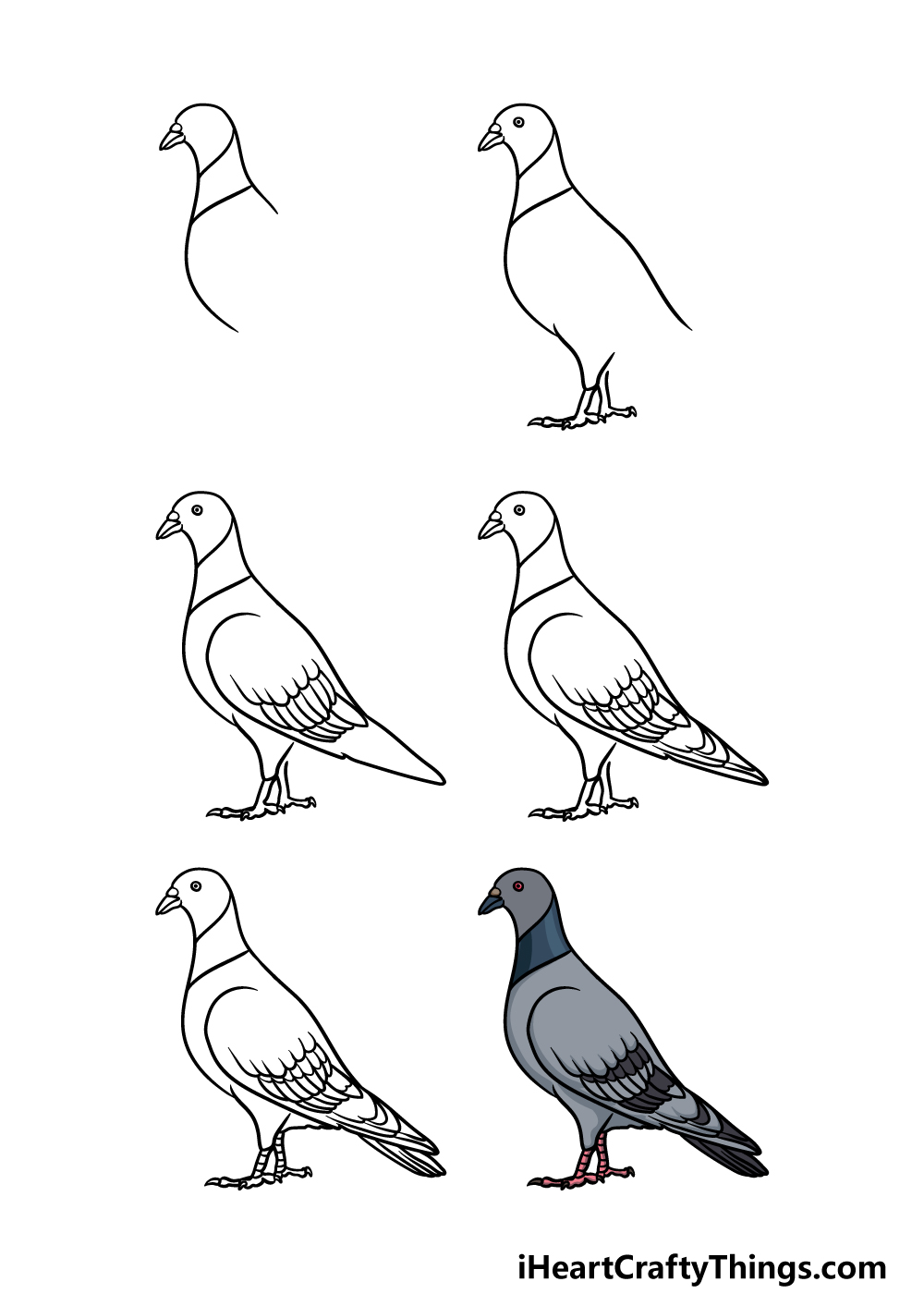 how to draw a pigeon in 6 steps
