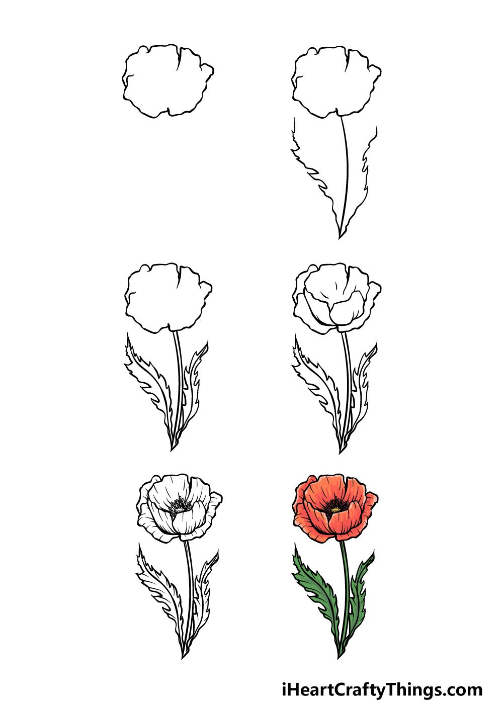 how to draw poppy in 6 steps