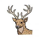 how to draw deer's head image