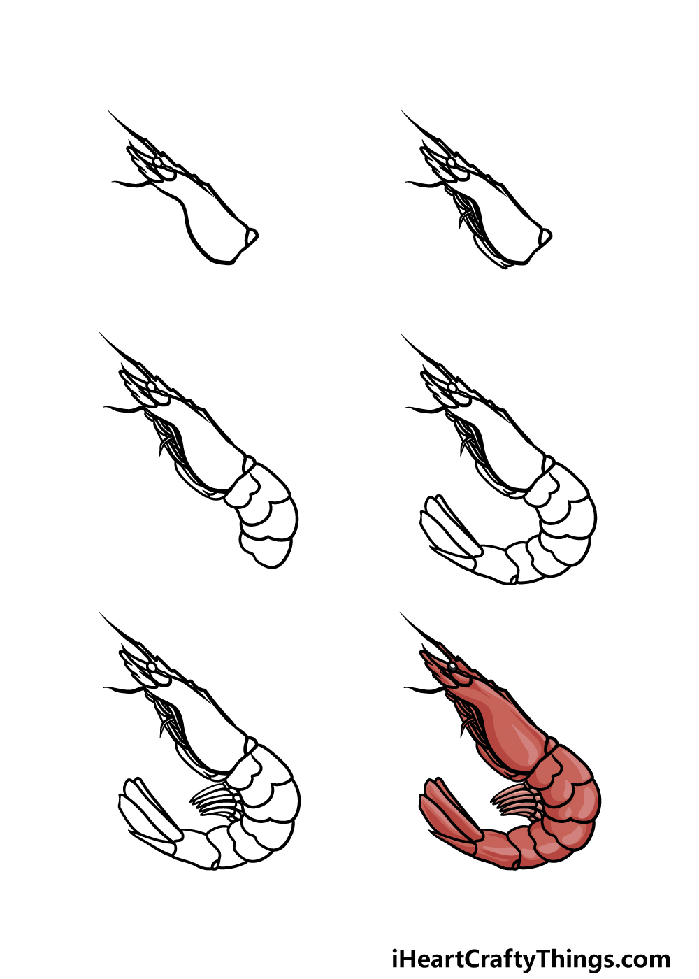 how to draw a shrimp in 6 steps