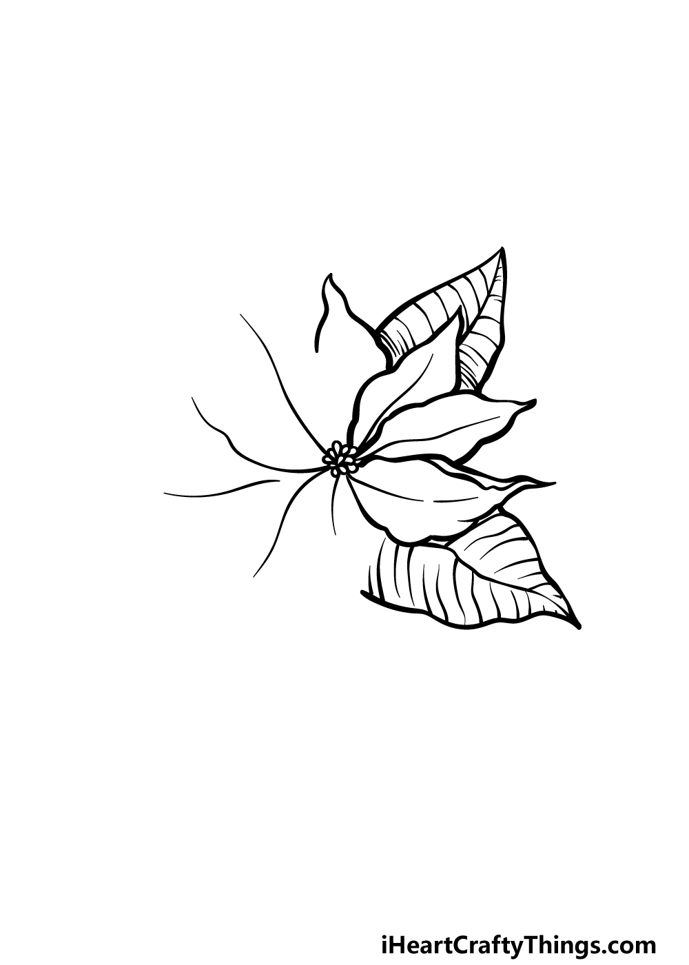 drawing poinsettia step 3