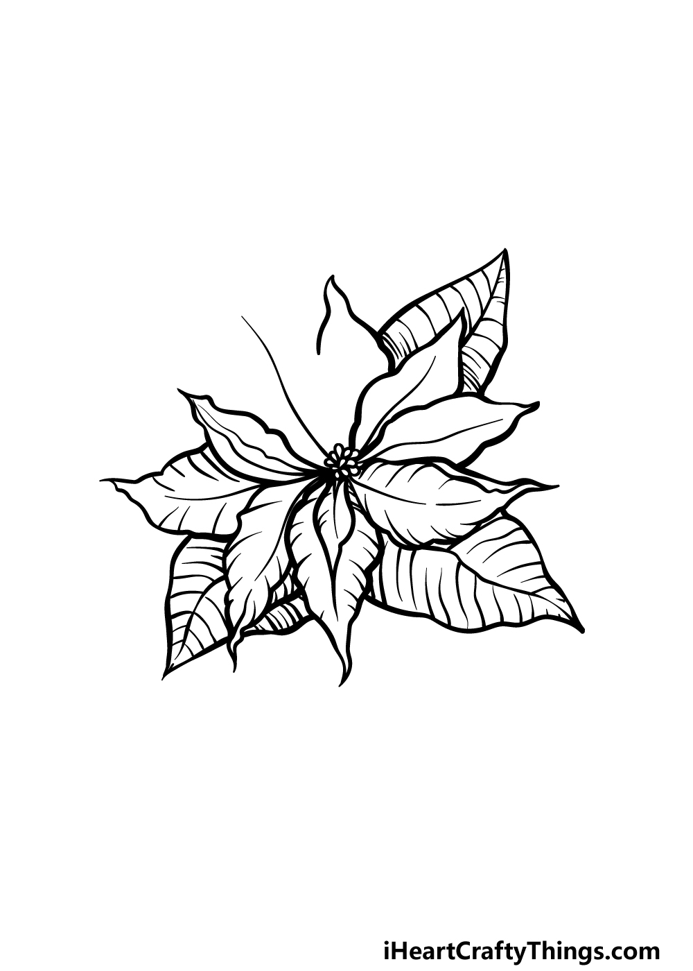 drawing poinsettia step 4