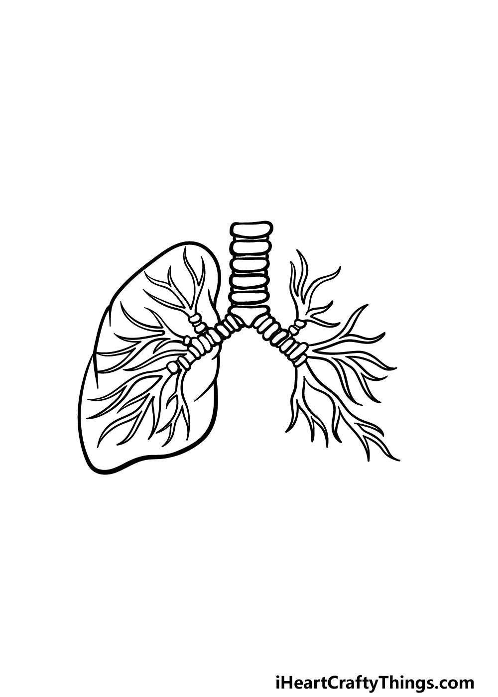 drawing lungs step 4