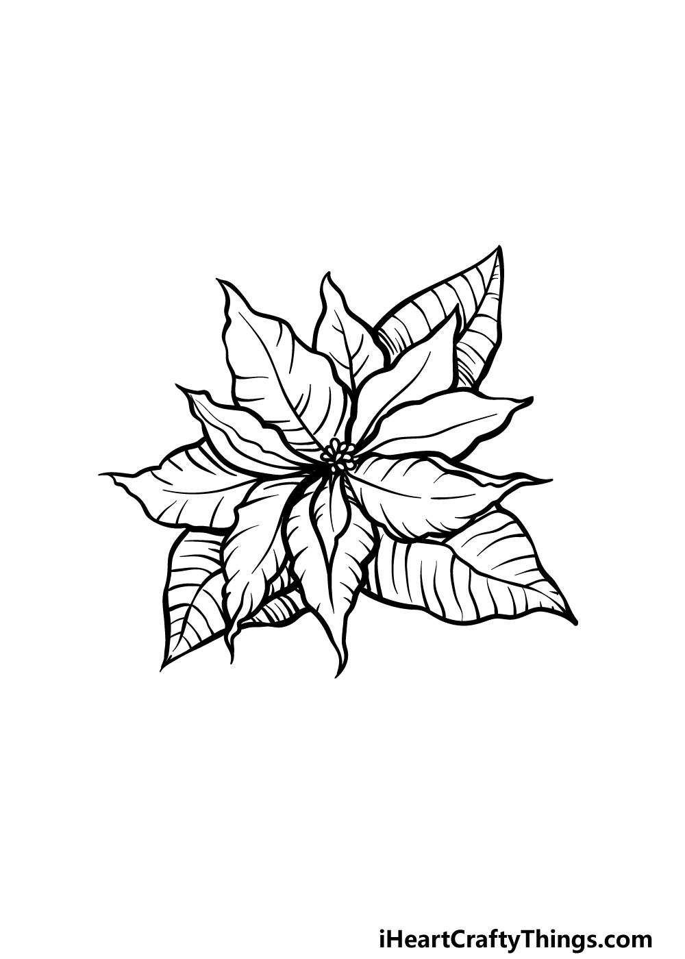 drawing poinsettia step 5