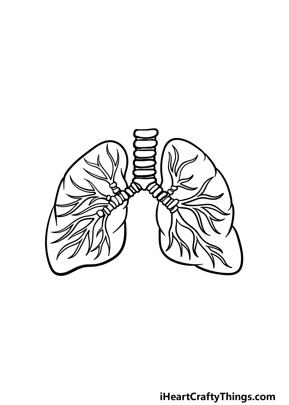 drawing lungs step 5