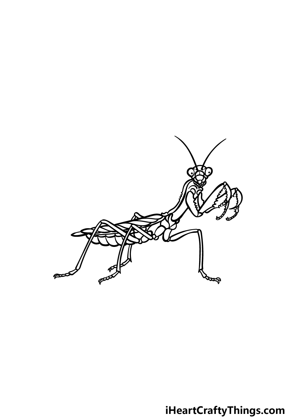 drawing an insect step 5