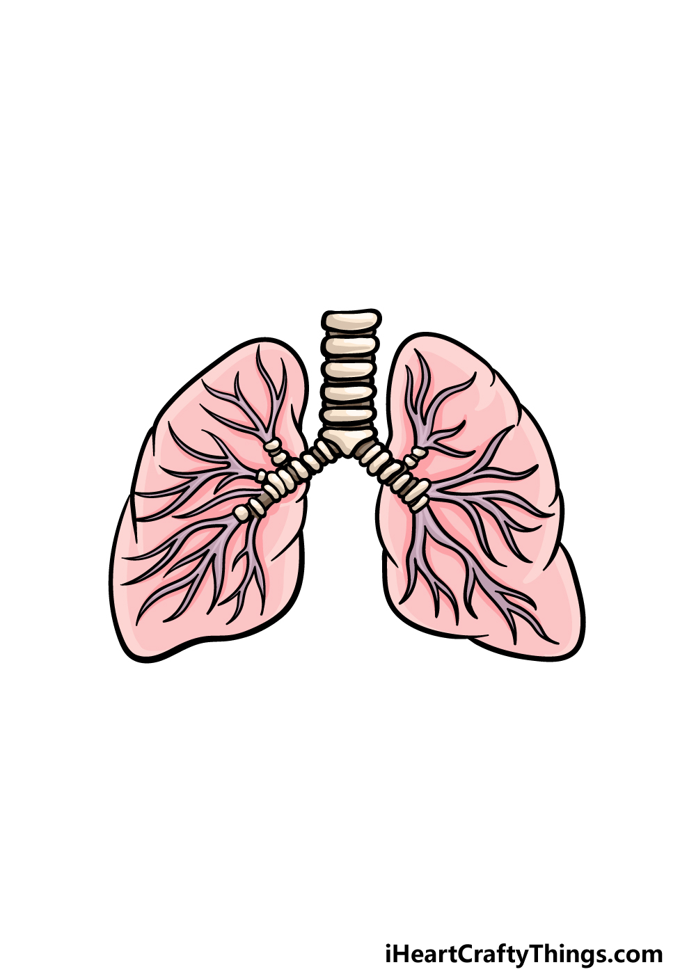 drawing lungs step 6