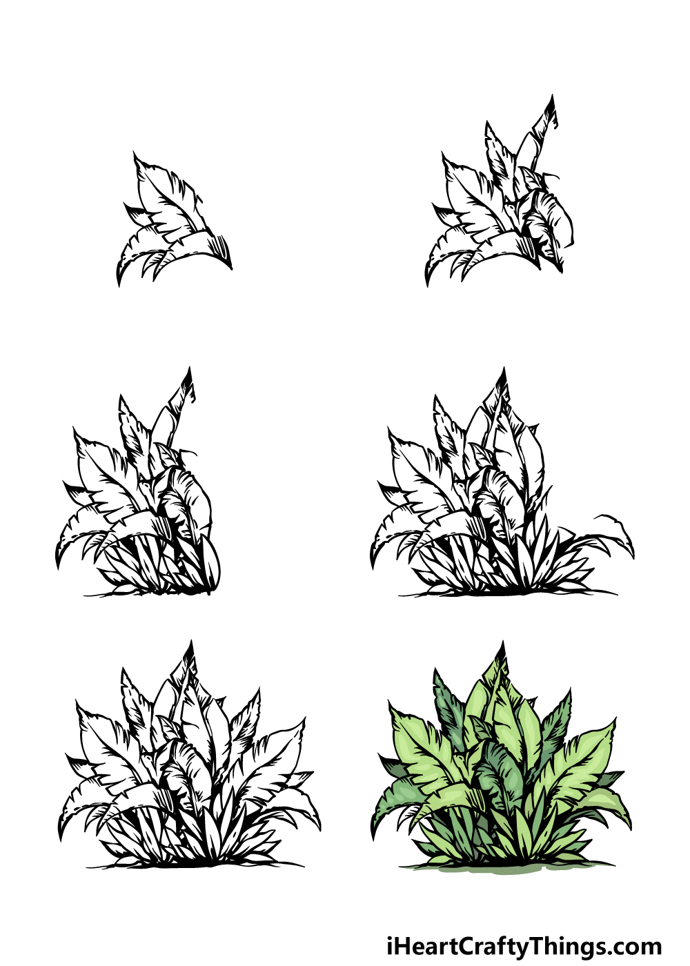 how to draw a bush in 6 steps