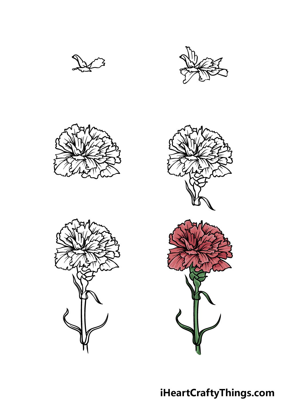 how to draw a carnation in 6 steps