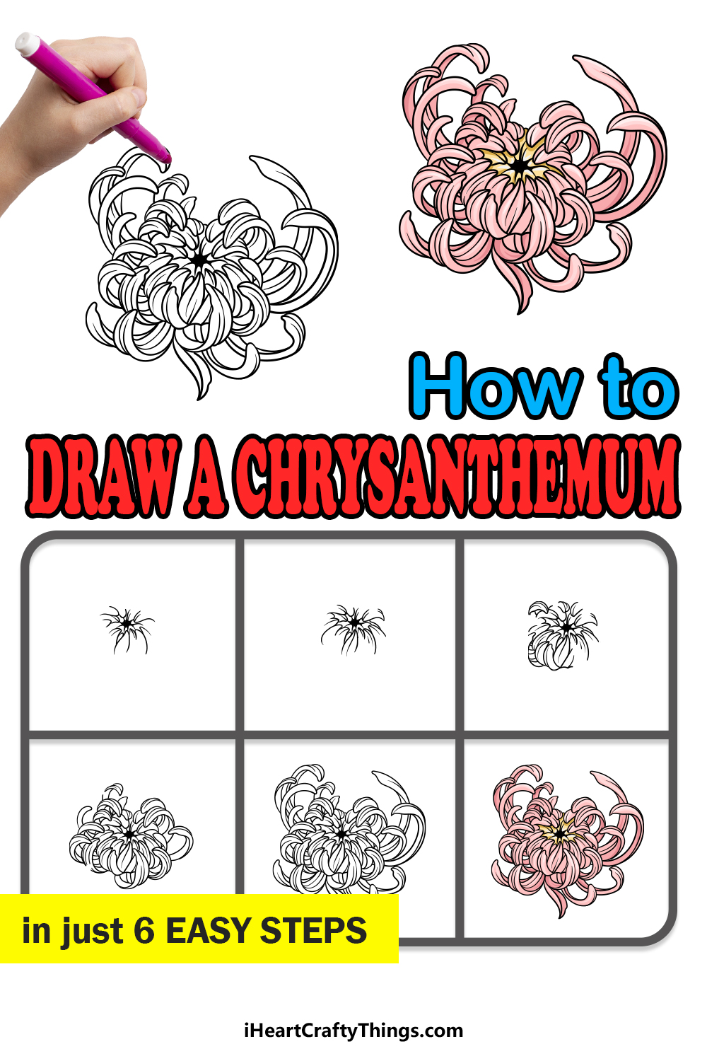 how to draw Chrysanthemum in 6 easy steps